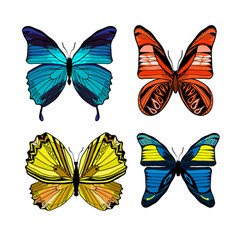 colorful graphic insects set vector image