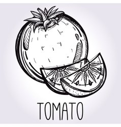 Hand drawn tomato vector