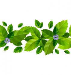 mint leaves background vector image vector image