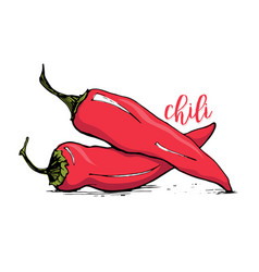 red chilli pepper sketch style vector image