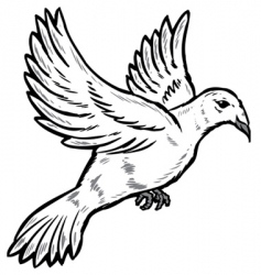 Dove in flight vector