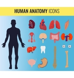 Human organ anatomy set vector
