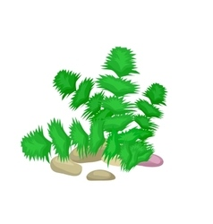 Seaweed isolated colorful corals and algae vector