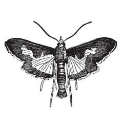 Pickle moth vintage vector