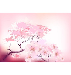 Sakura spring cherry tree vector