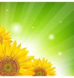 Sunflower And Sunburst vector image vector image