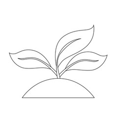 plant with leaves vector image vector image