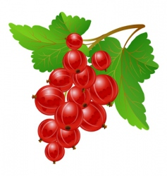 red gooseberries vector image