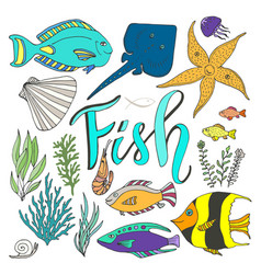 Fish set hand drawn marine with colorful fishes vector