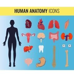 Human organ anatomy set vector image vector image