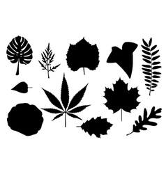 Leaf collage vector