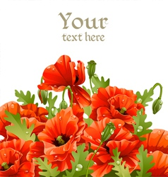Beautiful banner with red poppies for your message vector
