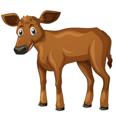 Cow cub with brown fur vector