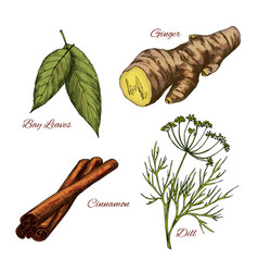 Sketch icons of spice and herb seasonings vector