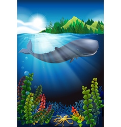Whale swimming under the ocean vector image