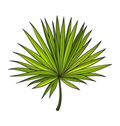 Fan shaped leaf of palmetto tree sketch style vector