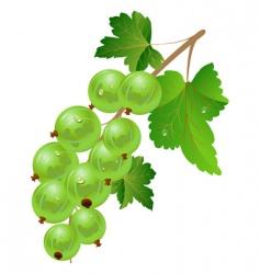green gooseberry vector image