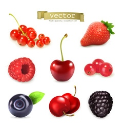 Sweet berries set of high quality vector