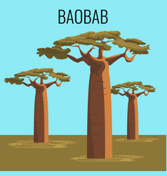 african baobab tree icon emblem vector image