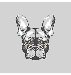 Hand drawn french bulldog portrait vector image vector image