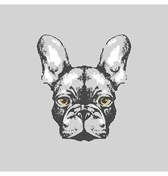 Hand drawn french bulldog portrait vector image