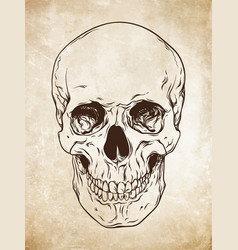 Line art human skull grunge background vector