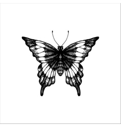 machaon hand drawn butterfly vector image vector image