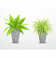 Tropical tree in cement pots collections vector