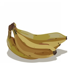 Watercolor banana isolated vector image