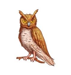 Night owl sketch icon vector image