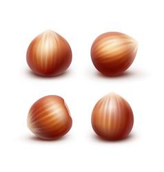 Set of full unpeeled realistic hazelnuts vector