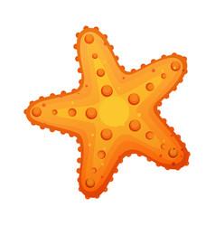 starfish sea star and shell colorful cartoon vector image vector image