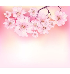 Beautiful sacura spring vector image