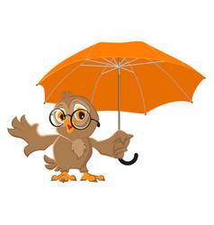 Owl bird holds open umbrella vector