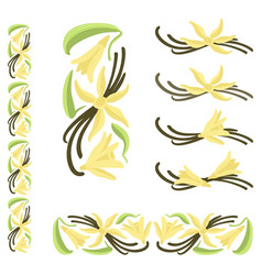 Vanilla pods with flowers and leaves vector