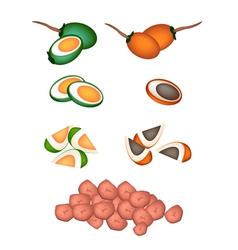 Set of areca nut fruit on white background vector