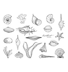 Hand drawn seashells collection set of seaweed vector