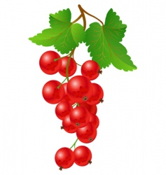 Currant red on bench vector