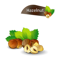 hazelnut kernel with green leaves set vector image vector image
