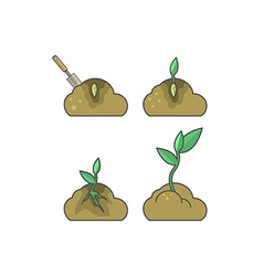 How to put plant stages of growth vector