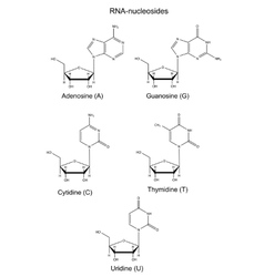 Structural chemical formulas of rna nucleosides vector