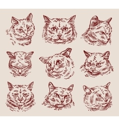 hand drawn sketch set cats vector image vector image