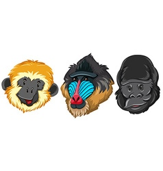 Different type of monkey vector image vector image