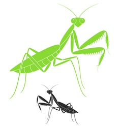 Praying mantis vector