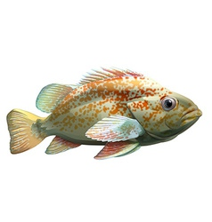 A big fish vector