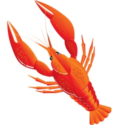 boiled crawfish vector image