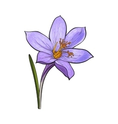 Delicate single crocus spring flower with stem and vector image
