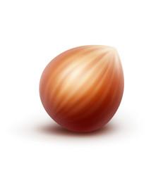 Full unpeeled realistic hazelnut isolated vector