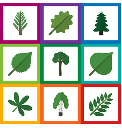 Flat icon bio set of acacia leaf park timber and vector