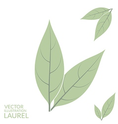 Laurel leaf vector image